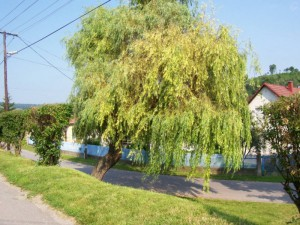 alacska szivarvany,2010.06.03.013