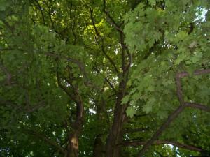 alacska szivarvany,2010.06.03.101