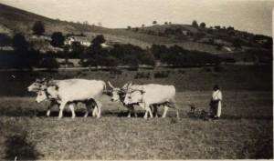 96SzantasAlacskan1918ban