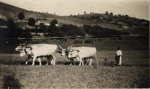 SzantasAlacskan1918